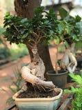 Apresentação dos bonsais cultura de jardinagem japonesa Miniscape imagens de stock