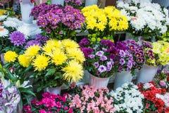 Apresenta muitos ramalhetes em uns vasos no crisântemo e em azáleas coloridos brilhantes da loja das prateleiras do florista Fotografia de Stock Royalty Free