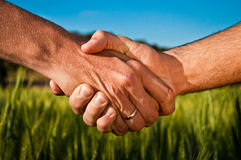 Apretón de manos en el campo de trigo Fotografía de archivo