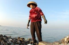 Apri 01 dell'ostrica Fotografie Stock