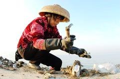 Apri 02 dell'ostrica Fotografia Stock