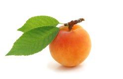 Apricot. Stock Photo