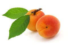Apricot. Stock Images