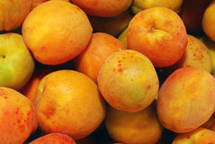 Apricot. Many apricots close-up in summer Stock Photography