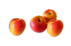 Apricot. Set of three red and yellow apricots standing togheter and one lonely, isolated on white Royalty Free Stock Photography