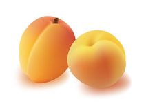 Apricot. Stock Photography