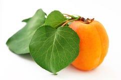 Free Apricot Royalty Free Stock Photo - 19828615