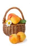 Apricot. Stock Photos