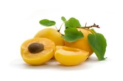 Free Apricot Stock Photos - 2534023