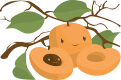 Apricot. S, s, they're everywhere Stock Images