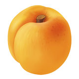 Apricot. Orange apricot isolated over white Stock Photos