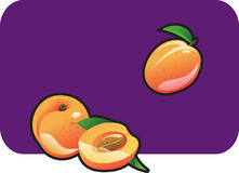 Apricot. Color illustration of a apricot. Part of my vector fruit Collection. The vector file is in AI-EPS8 format Royalty Free Stock Images