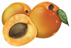 Apricot. Three apricots with its leaf royalty free illustration