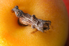 Apricot. Macro closu up shot of an apricot royalty free stock photography