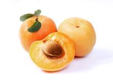 Free Apricot Stock Image - 9829281