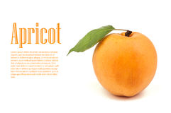 Apricot. S isolated on white background royalty free stock image