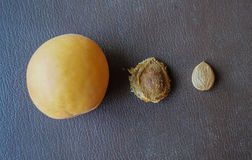 Apricot and apricots seeds royalty free stock photos