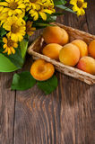 Apricot. S on table with bouquet of daisies Stock Photography