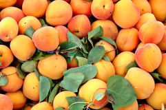 Apricot Bin Royalty Free Stock Photography