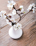 Apricot blooming brunches in the vase Stock Image