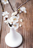 Apricot blooming brunches in the vase Stock Images