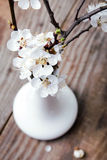 Apricot blooming brunches in the vase Stock Photo