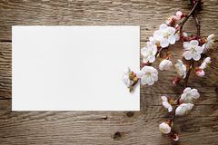 Apricot blossom and blank greeting card Royalty Free Stock Images
