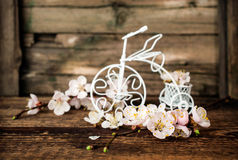 Apricot blossoms and decorative bicycle Royalty Free Stock Photo
