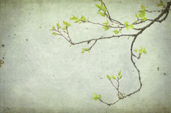 An apricot branch tree with leaves Royalty Free Stock Photography
