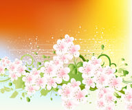 Apricot and Cherries blossoms. Illustration stock illustration