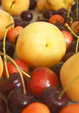 Apricot and cherry. Royalty Free Stock Photo
