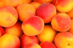 Apricot, close up Stock Image