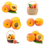 Apricot collection. Apricots collection ripe fruits isolated on white background Royalty Free Stock Photography