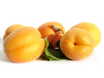 Apricot composition Stock Images