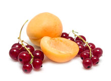 Apricot and currant Royalty Free Stock Images