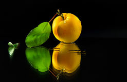 Apricot on a dark background. Juicy and ripe apricot fruits on a dark background Stock Photos
