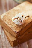 Apricot flowers on books Stock Photo