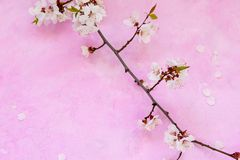 Apricot flowers on cement stock photography