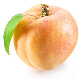 Apricot fruit with leaf on the white. Royalty Free Stock Photography