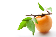 Apricot. fruit with leaves and twig. close-up on white. Bright apricot with leaves. close-up on white background Stock Image