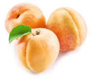 Apricot fruit with leaves. Royalty Free Stock Images