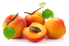 Apricot fruit with leaves Royalty Free Stock Image