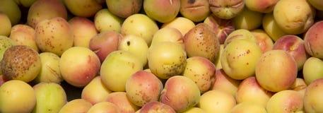 Apricot fruit. Piled of ripe orange organic apricot fruit Stock Photos