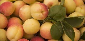 Apricot fruit. Piled of ripe orange organic apricot fruit Royalty Free Stock Photos