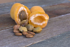 Apricot fruit with pips and kernels Stock Image