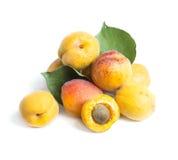 Apricot fruit Stock Image