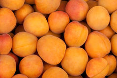 Apricot fruits. Many sweet apricot fruits background royalty free stock photography