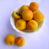 Apricot fruits. Summer freshness royalty free stock photography