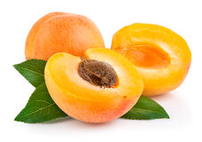 Apricot fruits with green leaf Stock Photos