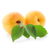 Apricot fruits isolated Stock Photography